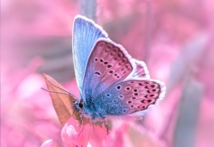real pink butterfly cropped